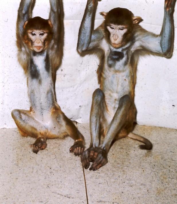 Brads Monkey