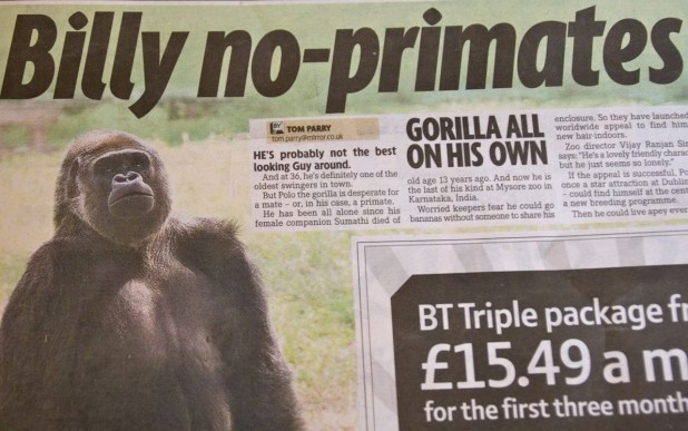 billy no primates