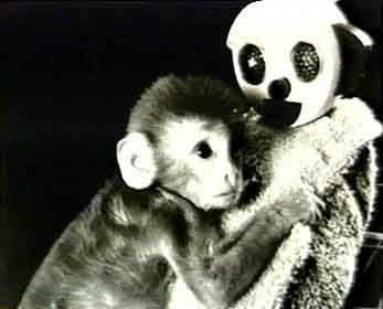 harlow-monkey